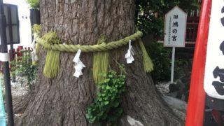 鴻神社 夫婦銀杏
